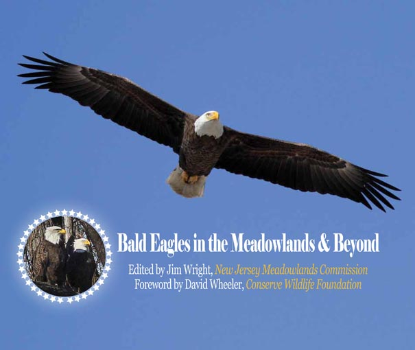Photo By Amy Paterson New Jersey Herald A Bald Eagle Flies Across The Delaware River In Lackawaxen Pa 2006 Every Winter As Many 200